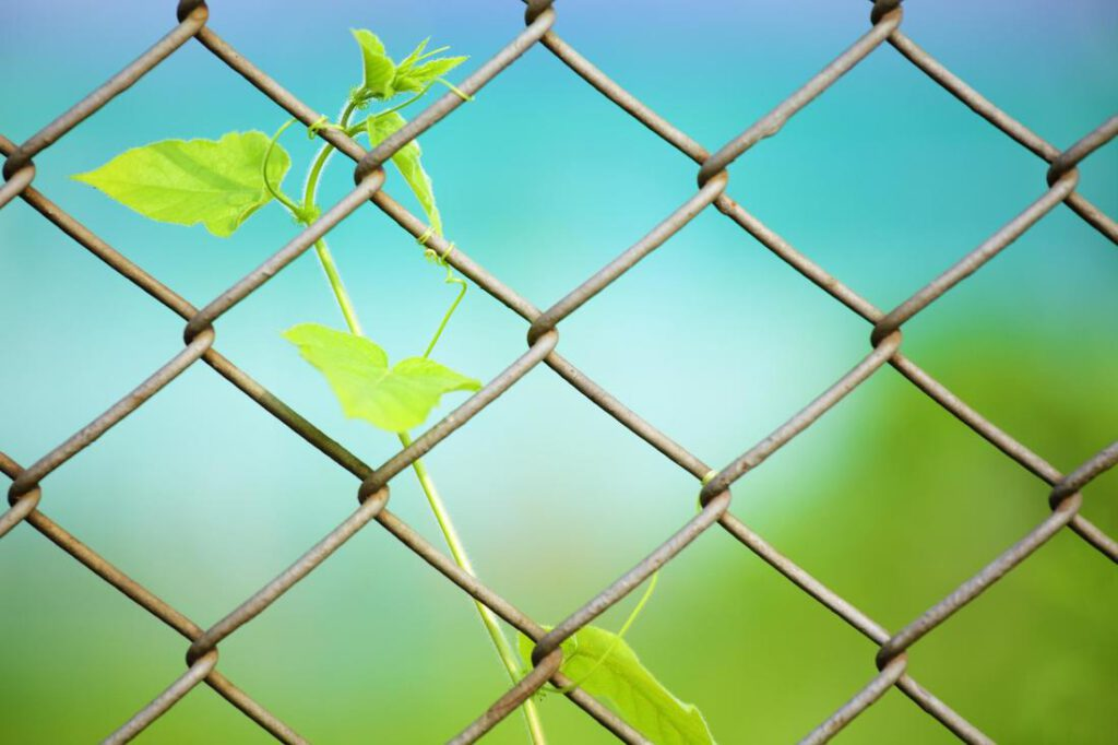 cypress-fence-pros-chain-link-fencing-1_1_orig